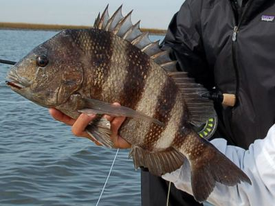 Hot Spots Report for Pensacola Fishing Charters January 2014